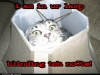 lolcats-lamp